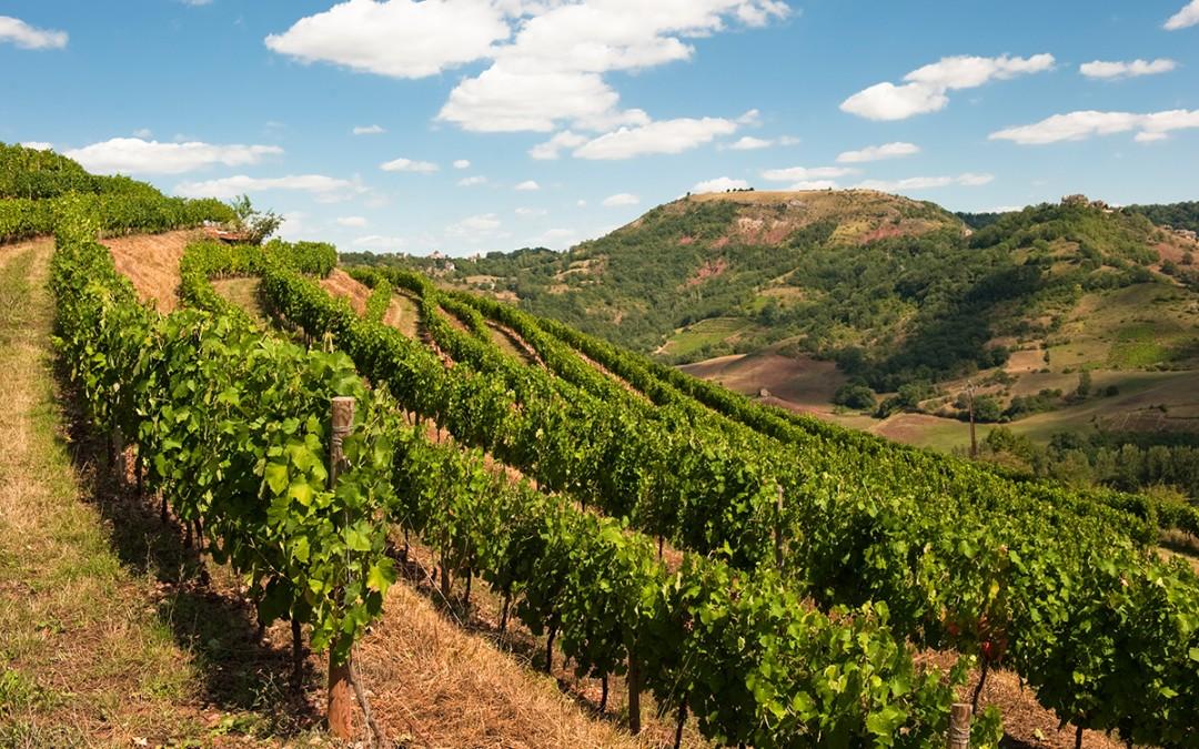 Méthodologie de gestion des paysages viticoles à l'échelle des territoires