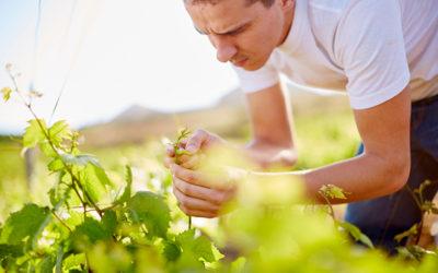Court-Noué : avant la plantation, attention au repos du sol
