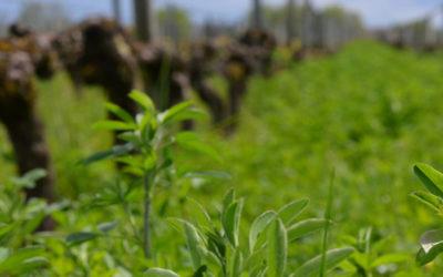 Gestion de la biodiversité dans les paysages viticoles