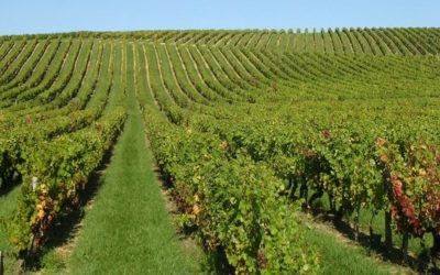 Innoseta : un réseau sur l'innovation en matière de pulvérisation agricole