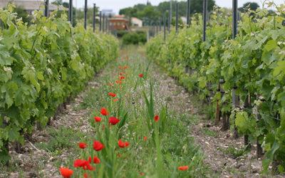 Viticulture, la preuve par 3