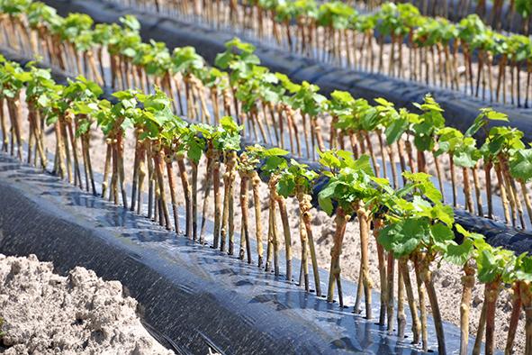 Plant2Pro : des innovations au service du végétal