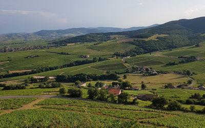 Guide de gestion des paysages viticoles