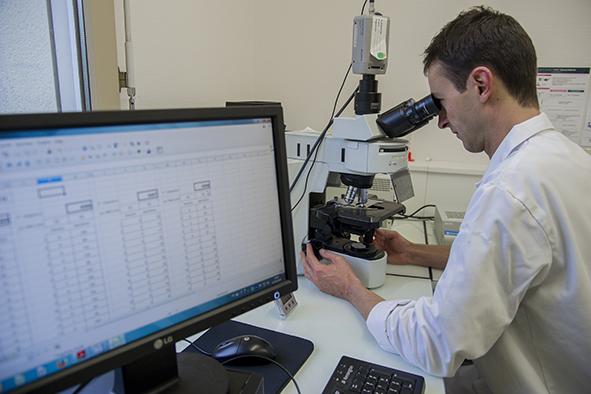 Identification des variétés par l'ampélographie moléculaire