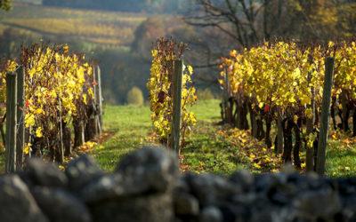 Sélection et diffusion du matériel végétal en Val de Loire