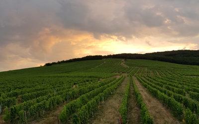 La pente est forte mais la vigne est belle