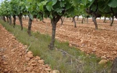 L'enherbement en viticulture méditerranéenne