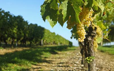 Guide de viticulture durable