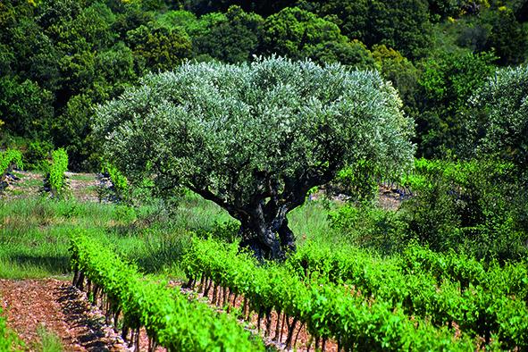 Entretiens vigne vin 2020