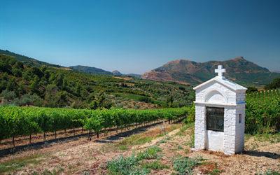 Des cépages étrangers à la disposition des vignerons français