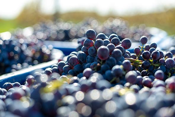 Bio-protection et gestion des fermentations alcooliques en bio