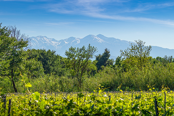Les aventuriers des vignes oubliées des Pyrénées