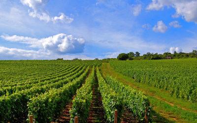Notre patrimoine « vigne » est d'une richesse incroyable