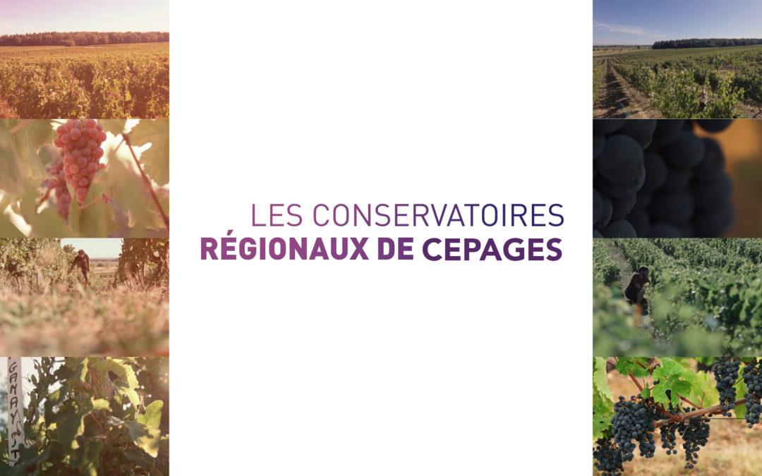 Les Conservatoires Régionaux de cépages