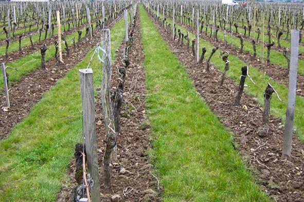 Sol :  les stratégies sans herbicides
