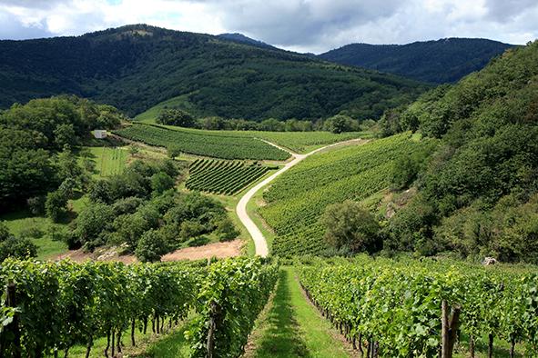 Accompagner la viticulture vers l'agroécologie