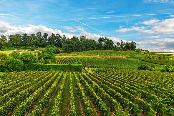 Utilisation du biocontrôle en viticulture